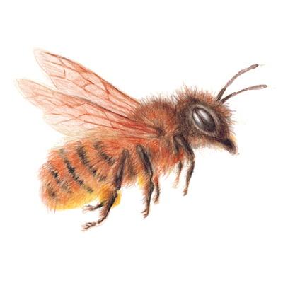 Czym są pszczoły