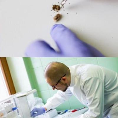 Dzikie pszczoły na diecie śmieciowej