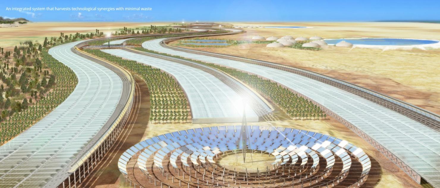Biomimikra – nowy paradygmat w zrównoważonym projektowaniu