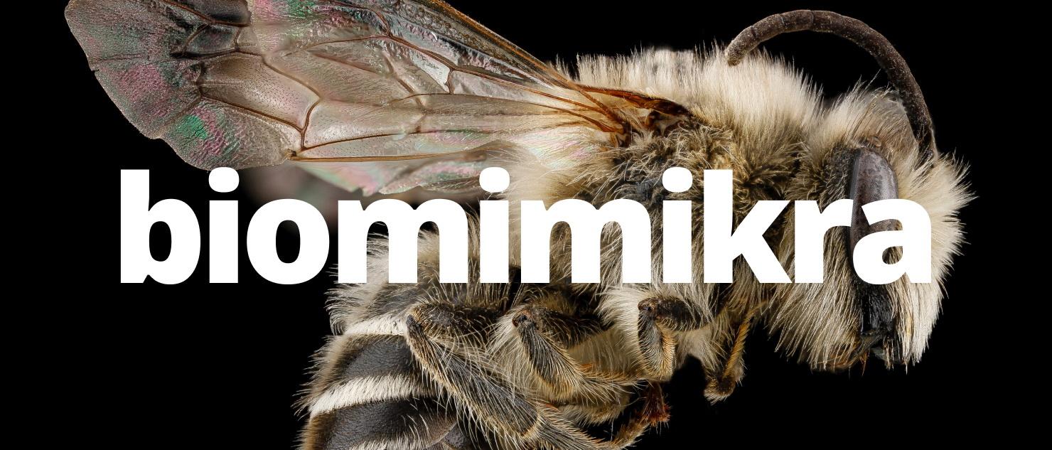 Biomimikra – innowacje inspirowane naturą