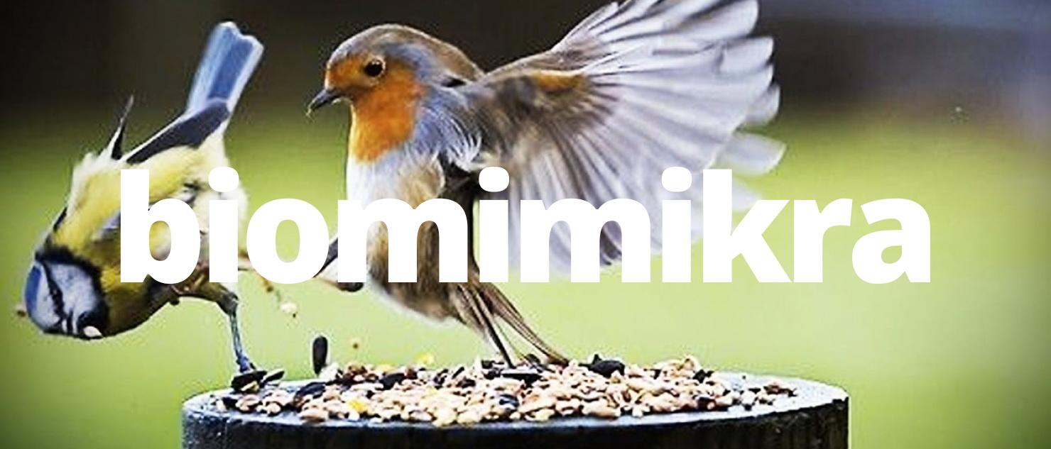Ptaki, Pszczoły, Pająki, – interdyscyplinarna biomimikra